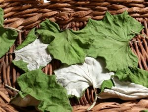 How to dry herbs coltsfoot leaves