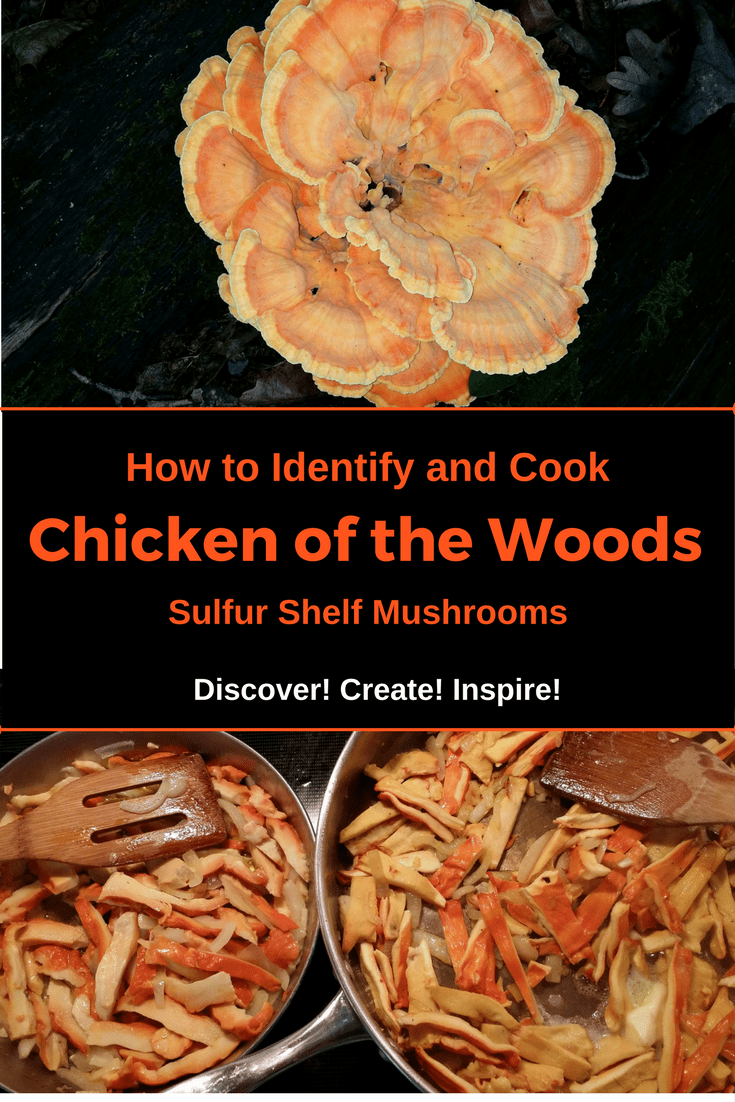 How to Identify and Cook Chicken of the Woods Sulfur Shelf Mushroom, Laetiporus sulphureus, Laetiporus Cincinnatus from Discover! Create! Inspire!