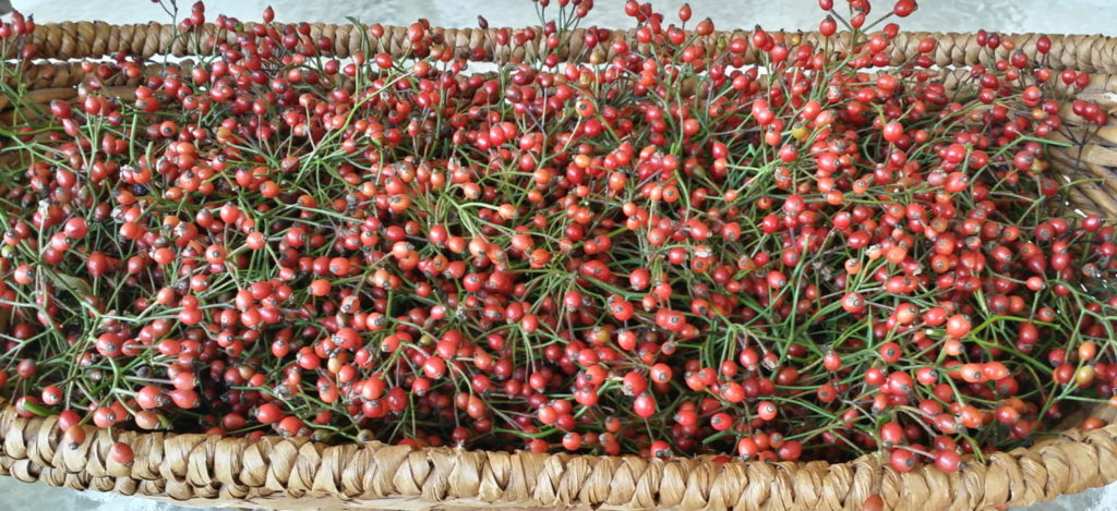 how to dry hearbs wild rose hips