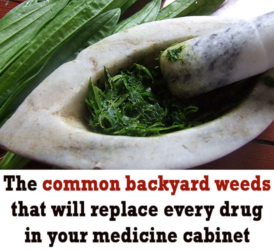What medicinal weeds can i find in my yard? Can plants replace medicine? Use these medicinal plants to replace medicines.