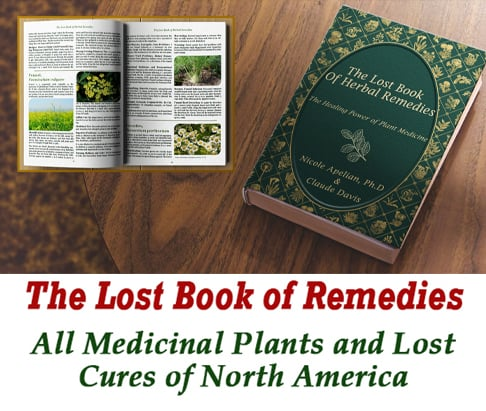 What plants and herbs of North America are medicinal?