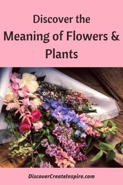 Flower and plants have meanins
