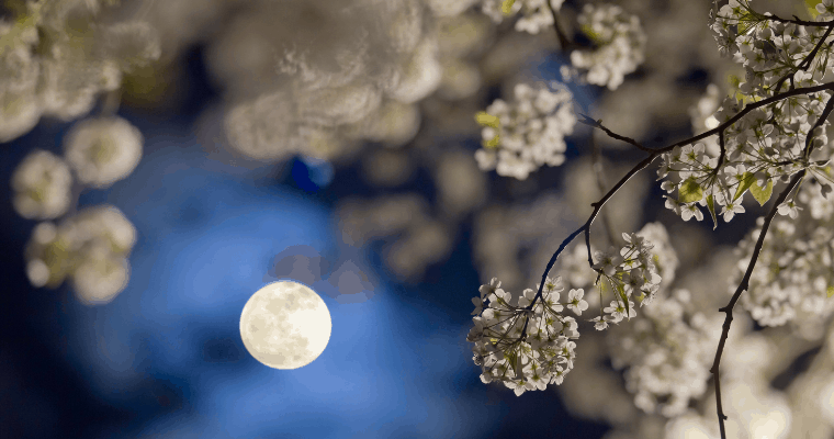 Create a Twinkling Night Blooming Garden with Flowers that Bloom at Night and Enchanted Lighting