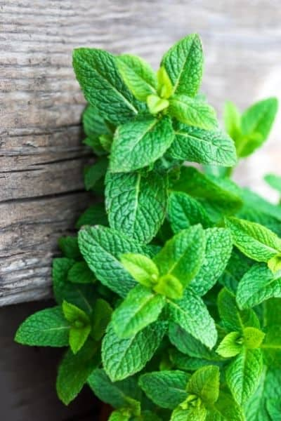 Lemon balm is a calming nervine herb that helps you deal with stress. DiscoverCreateInspire.com