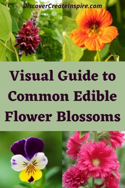 Extensive Visual Guide to Common Edible Flower Blossoms DiscoverCreateInspire.com